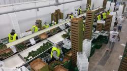 Aprueban Protocolos Sanitarios ante el COVID-19, para las actividades del Sector Agricultura y Riego