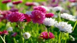 Apuntando a la producción de flores de corte: cómo el mapeo de plagas y enfermedades marca la diferencia en el control de los costos y la cosecha