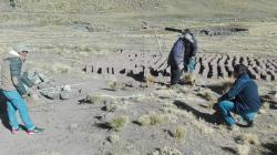 Arequipa: pobladores de Caylloma implementarán 405 cobertizos para alpacas y ovinos