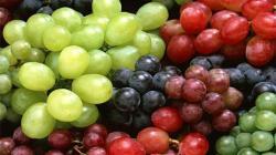 Aumenta compra de uva de mesa en consumidores de Estados Unidos