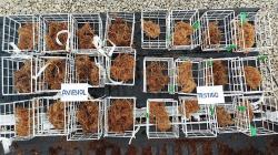 AVIBIOL culmina ensayo sobre el efecto de Avibiol-bioefector en el cultivo de arándano