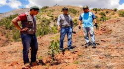 Ayacucho: Proyecto palto de La Mar continúa en crecimiento con injerto de plantones