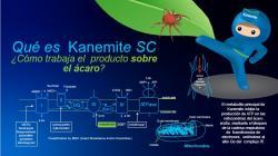 Bayer lanza en Perú acaricida Kanemite