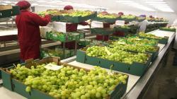 Boom agroexportador de Perú contribuyó a la reducción de la pobreza