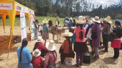 Cajamarca: capacitan a 300 pequeños ganaderos de La Encañada para impulsar producción agropecuaria