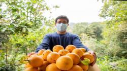 Cajamarca mejorará la producción de granadilla