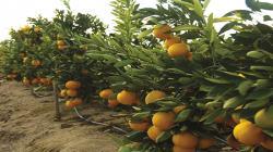 Cambio climático y sequía generan cambios en la producción agrícola de Chile