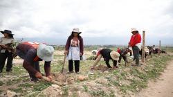 """Campaña de siembra """"Los Andes Verdes"""" inicia tramo final con plantación de 1.000 árboles en Vista Alegre"""