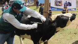 Campaña de vacunación contra el Ántrax logró proteger a 13.783 animales susceptibles en Tacna el 2019