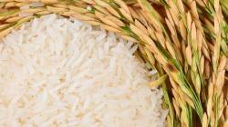 CampoSur planea sumar 150 hectáreas de arroz el próximo año