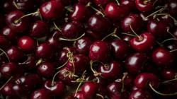Chile: Exportaciones de frutas caen en valor 10% y en volumen 5% entre enero y septiembre del presente año