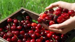 Chile exportará 209.000 toneladas de cerezas en la temporada 2019/20