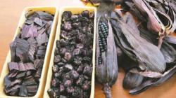 Científicos peruanos desarrollarán bebida instantánea a base de residuos de maíz morado