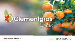 CLEMENTGROS AUMENTA PRODUCIÓN Y MEJORA CURVA DE CALIBRES EN PALTOS