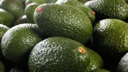 Colombia cultiva palta Hass en 25 mil hectáreas, menos del 1% de su superficie potencial