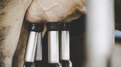 Colombia: la industria lechera es duramente golpeada por las importaciones