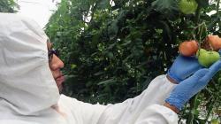 ComexPerú: OVM aportan beneficios superiores a los alcanzados por las prácticas tradicionales de hibridación