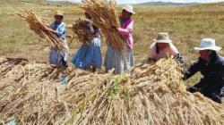 Comisión Agraria del Congreso aprobó proyecto de ley de Fortalecimiento y Promoción de las Cooperativas Agrarias