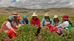 Cómo recuperar y transformar los Sistemas Agroalimentarios de América Latina y el Caribe post Covid-19