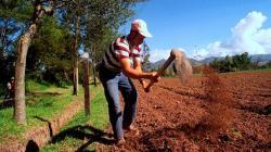 Comunidad Andina presentará la Agenda Agropecuaria Andina
