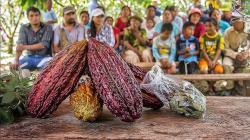 """Conformarán Grupo de Trabajo Multisectorial para elaborar el """"Plan Nacional de Desarrollo de la Cadena de Valor del Cacao - Chocolate 2020-2030"""""""