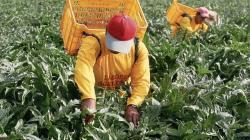 Conoce cómo participar en la elaboración del reglamento de la Ley Agraria