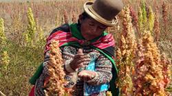 Consumo de granos andinos en Perú alcanza los dos kilos por persona al año