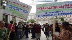 Conveagro solicita la promulgación de Ley de Moratoria Indefinida de Transgénicos