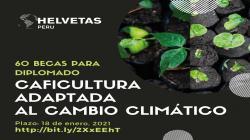 Cooperación suiza financia 60 becas para diplomado en caficultura adaptada al cambio climático
