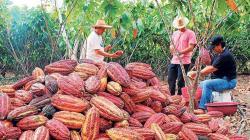 Cooperativa Cooperamaz protege 370 mil hectáreas de bosques de San Martín y Amazonas