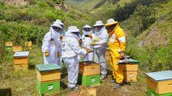 """Copeapi realizará curso de capacitación apícola """"Crianza de abejas y productos apícolas"""""""