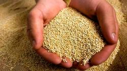 Costo logístico para exportar quinua de Ayacucho se reduce en más de 10%