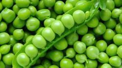 Crecen exportaciones de arvejas frescas y suman US$ 20 millones entre enero y agosto