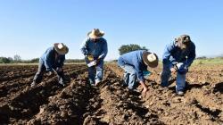 Crecen intenciones de siembra en 3.5% en la campaña actual