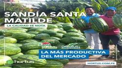 Cultivo de Sandía Santa Matilde incrementa rentabilidad al agricultor