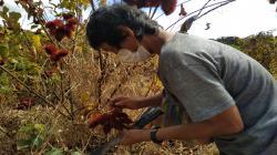 Cusco: agricultores de comunidad matsigenka reciben mascarillas y orientación para combatir el Covid-19