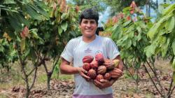 Desarrollo alternativo es fundamental en la transformación de las economías de las regiones y las familias peruanas
