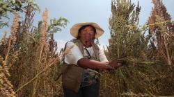 Desarrollo de la agricultura familiar reducirá la pobreza en zonas rurales
