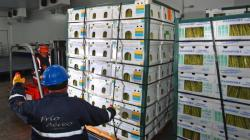 Desde el inicio de la cuarentena hasta el 17 de mayo las agroexportaciones vía aérea cayeron en volumen 17%