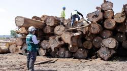 Destinarán presupuesto para control y vigilancia de los bosques y sus recursos forestales