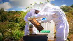 Devida impulsa la apicultura como actividad económica alternativa en el VRAEM
