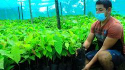 Devida promueve instalación de 480 nuevas hectáreas de cacao