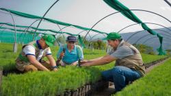 Devida reforestará 760 hectáreas de suelos degradados por cultivos ilícitos en Ayacucho