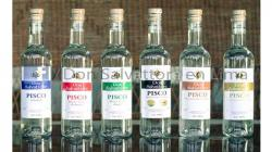 Don Salvattore prepara su tercera planta de procesos de vinos gasificados y alcohol vínico
