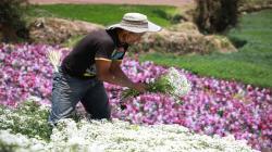 DRA Junín impulsará proyectos de inversión para apoyar a floricultores de Tarma