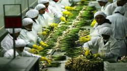 El 55.93% de los trabajadores formalizados son del sector agrario