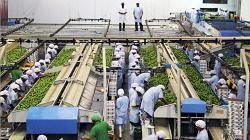 """El Colombia destacan el """"milagro agrícola peruano"""" y piden copiar la Ley de Promoción del sector"""