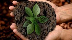 El compostaje permite a las municipalidades reducir hasta 50% la cantidad de residuos