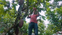 ¿El pequeño y mediano agricultor peruano puede mejorar su productividad?
