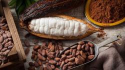 """El secreto del """"chocolate más exquisito del mundo"""" que guarda el Amazonas en Perú"""